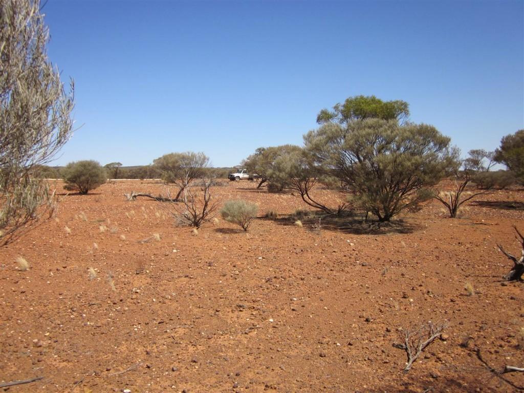 Barrick Soils (Large)