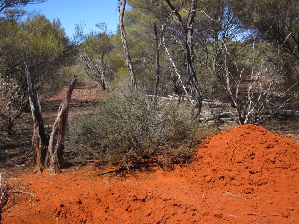 MacArthur Soils (Large)
