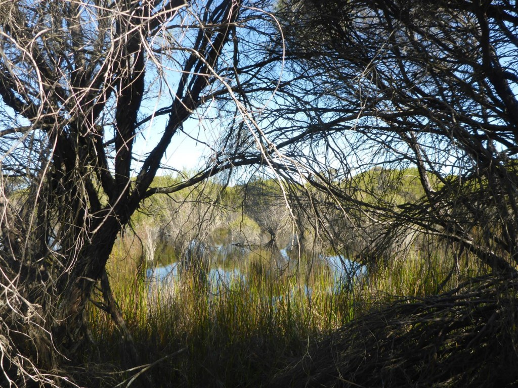 WA Wetland Management Conference