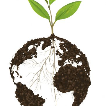 World Soil Day 2014