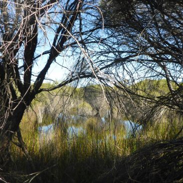 WA Wetland Management Conference 2016